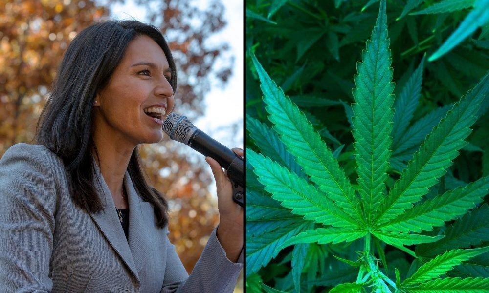 Where Presidential Candidate Tulsi Gabbard Stands On Marijuana