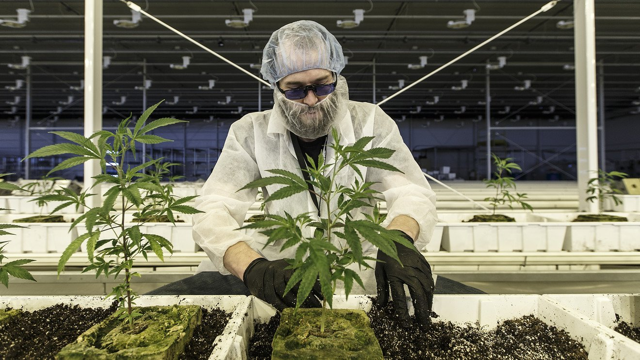 Aurora Cannabis earnings show big growth in pot sales, but worrisome profit trend
