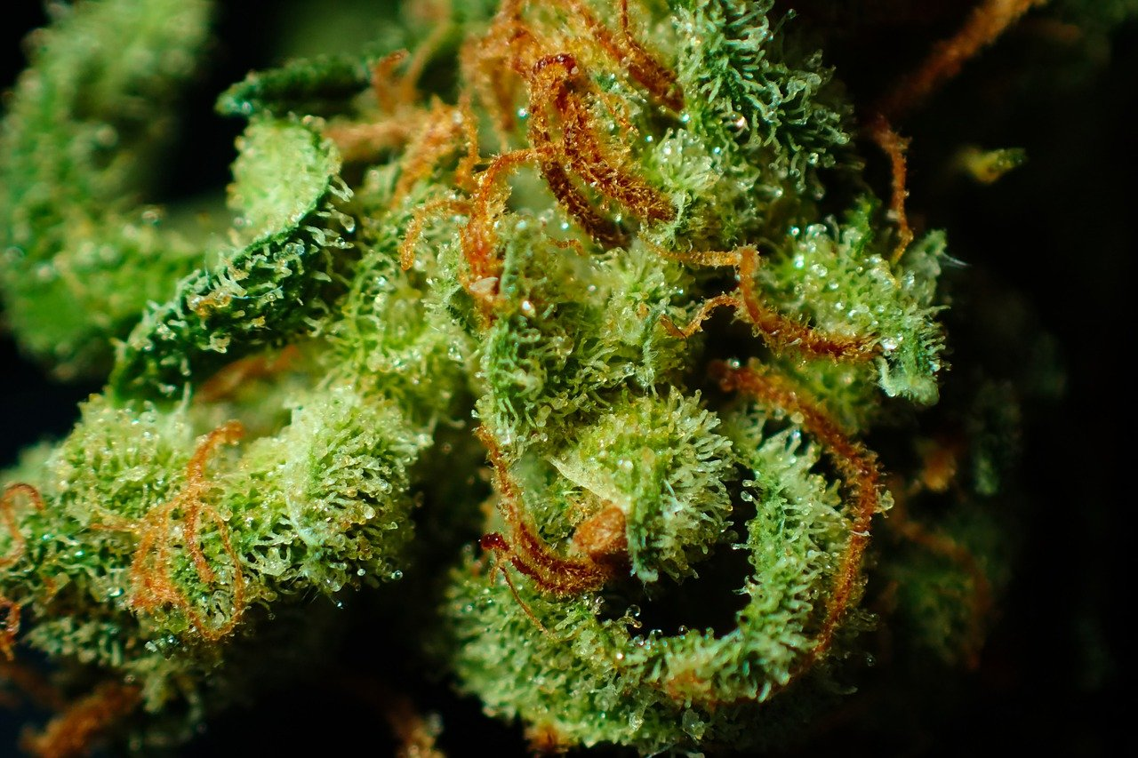 Do you know what are those white crystals on weed and why should we be happy when we see them?