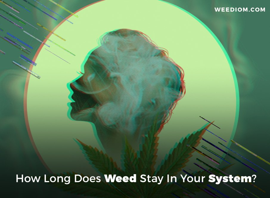 How Long Does Weed Stay In Your System? - Weediom