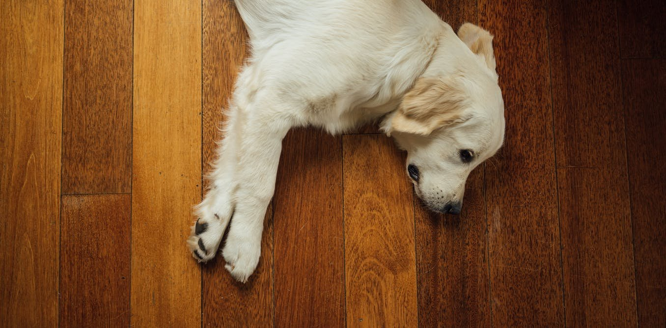 How to keep your pets safe from marijuana poisoning