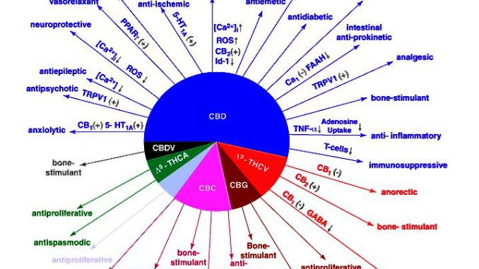 Learn Now – What Chemicals Are Present In Marijuana