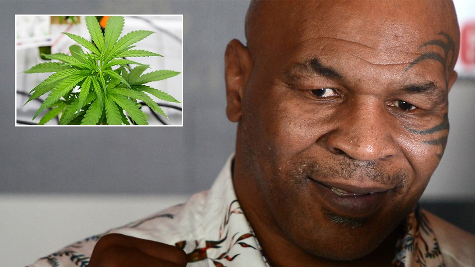 Mike Tyson spotted smoking FOOT-LONG joint at marijuana festival (VIDEO) ... Bet that packs a punch!