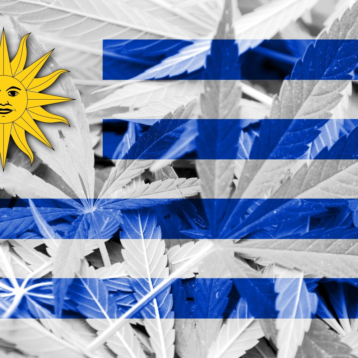 Uruguay legalized weed 6 years ago and experts say it's made the country better than ever