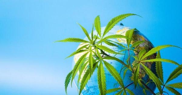 WHO recommends rescheduling marijuana under international treaties