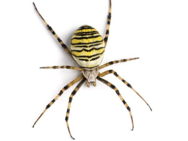 What happened when NASA gave spiders marijuana?