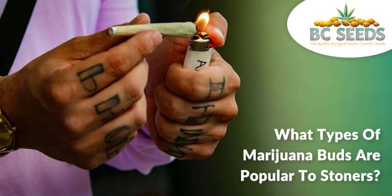 4 Famous Marijuana Buds to Stoners