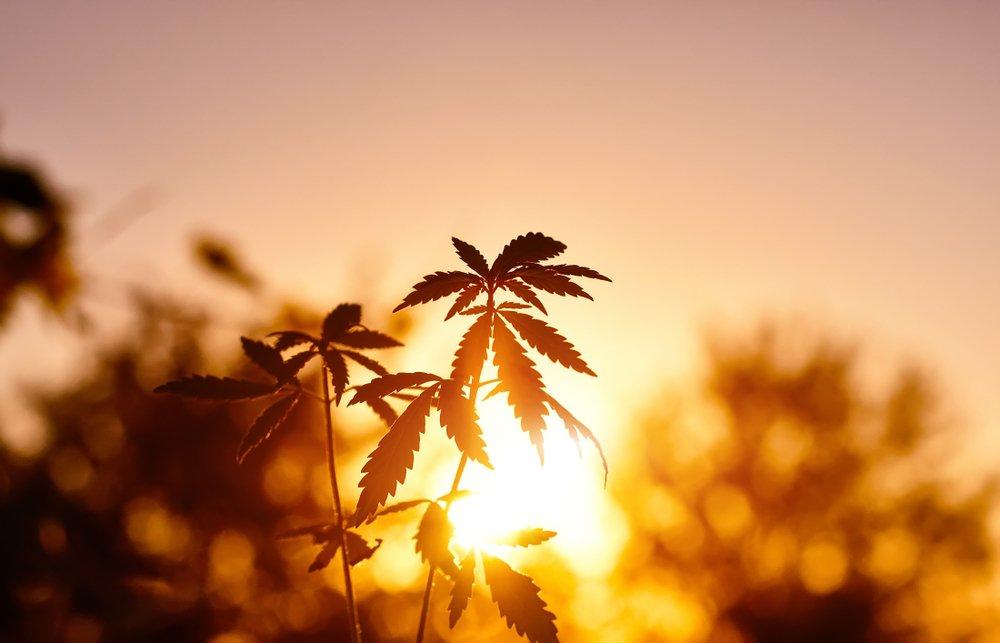 All the Cannabinoids in Marijuana That Aren't THC