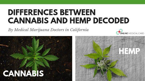Differences Between Cannabis and Hemp