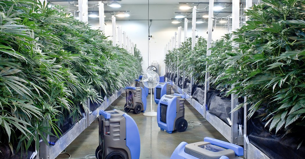 Effort to Legalize Marijuana in New Jersey Collapses -- Here's What Went Wrong