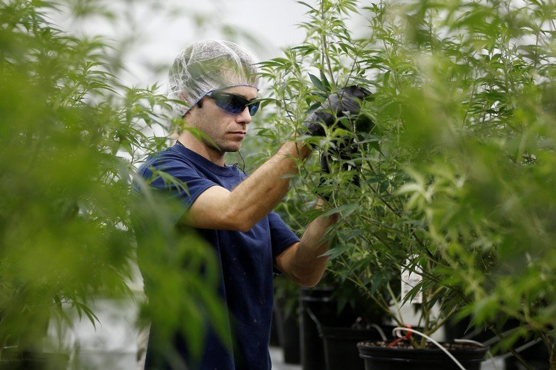 Marijuana is the fastest-growing industry in the US job market, according to a new report | Markets Insider