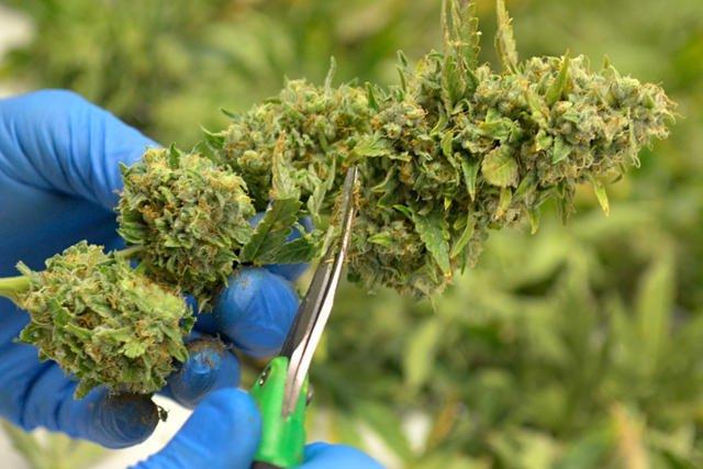 New Mexico Marijuana Legalization Bill Denied Senate Committee Hearing