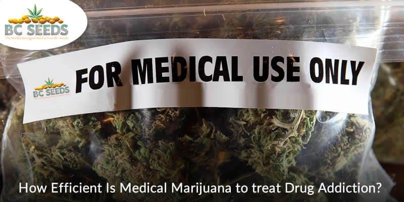 State Importance of Medical Marijuana in Treating Drug Addiction