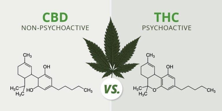 Tulsi Gabbard and Don Young to Lead Landmark Bipartisan Cannabis Reform