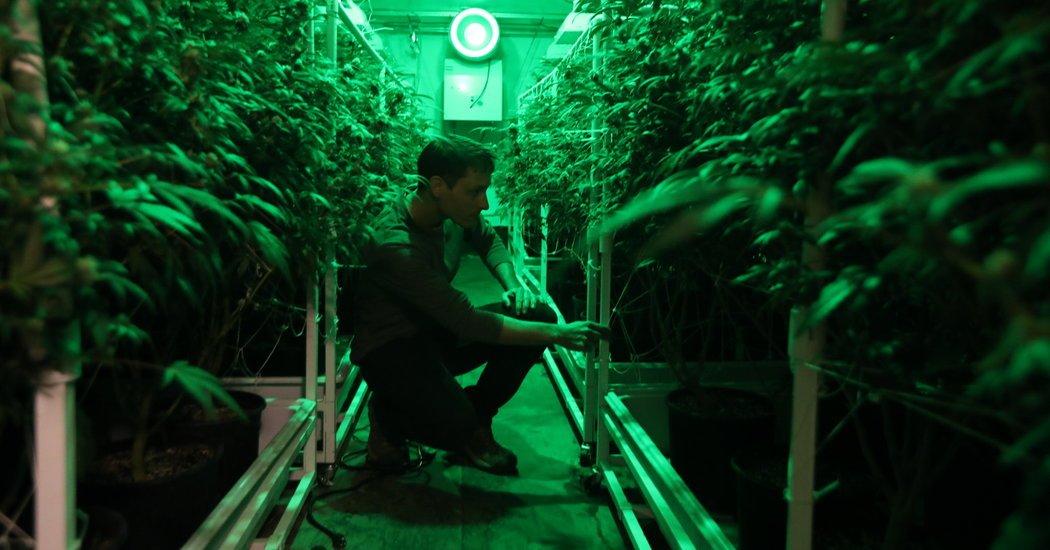 Cannabis, Marijuana, Weed, Pot? Just Call It a Job Machine