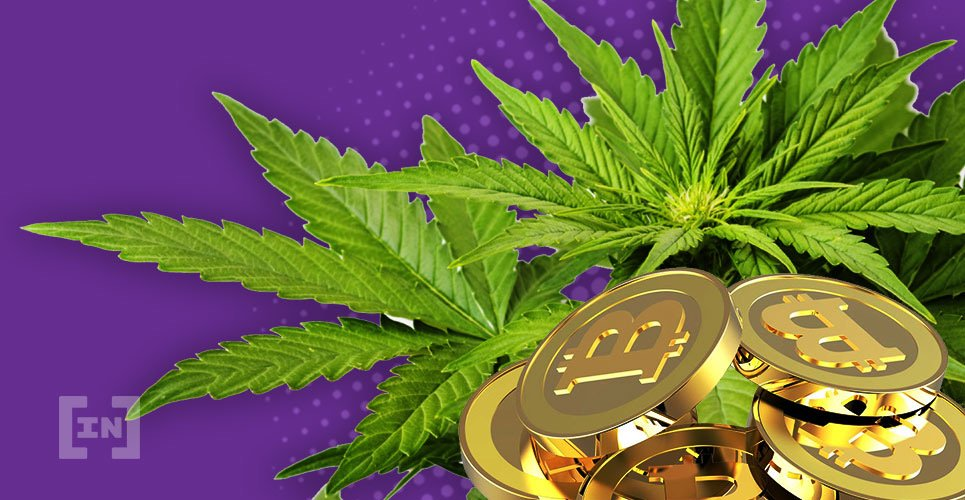 Comparing cannabis stocks with cryptocurrencies: Which one performs better in 2019?