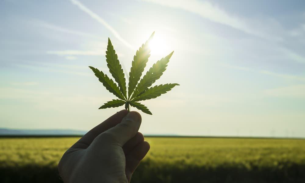 Kentucky Gubernatorial Candidate Calls for Marijuana Decriminalization