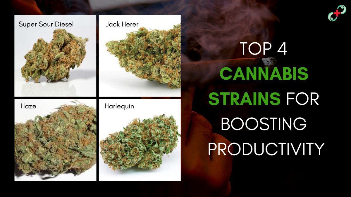 Top 4 Cannabis Strains for Boosting Productivity