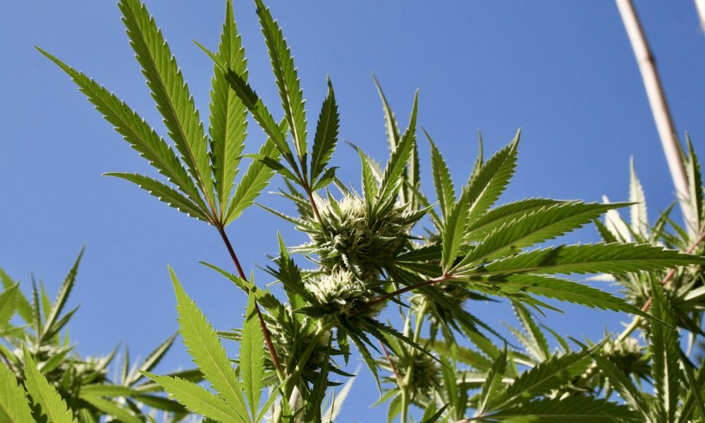 Top Congressional Democrats Announce Bill To Federally Deschedule Marijuana