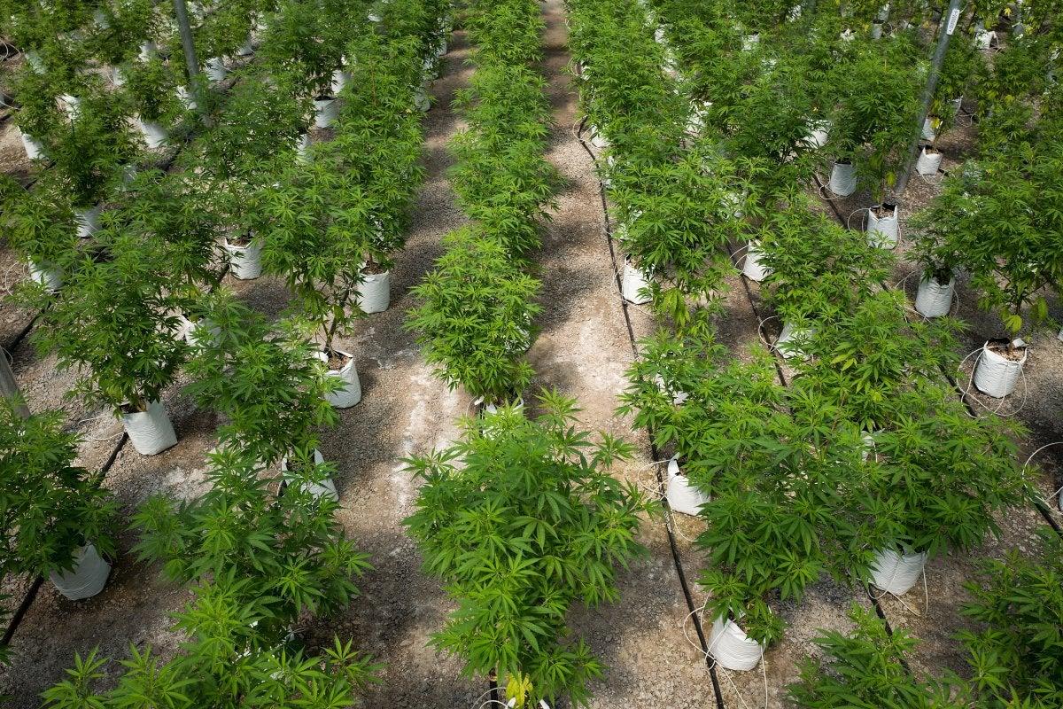As medical marijuana applications go online, Kansas City man looks for new venture | FOX 4 Kansas City WDAF-TV