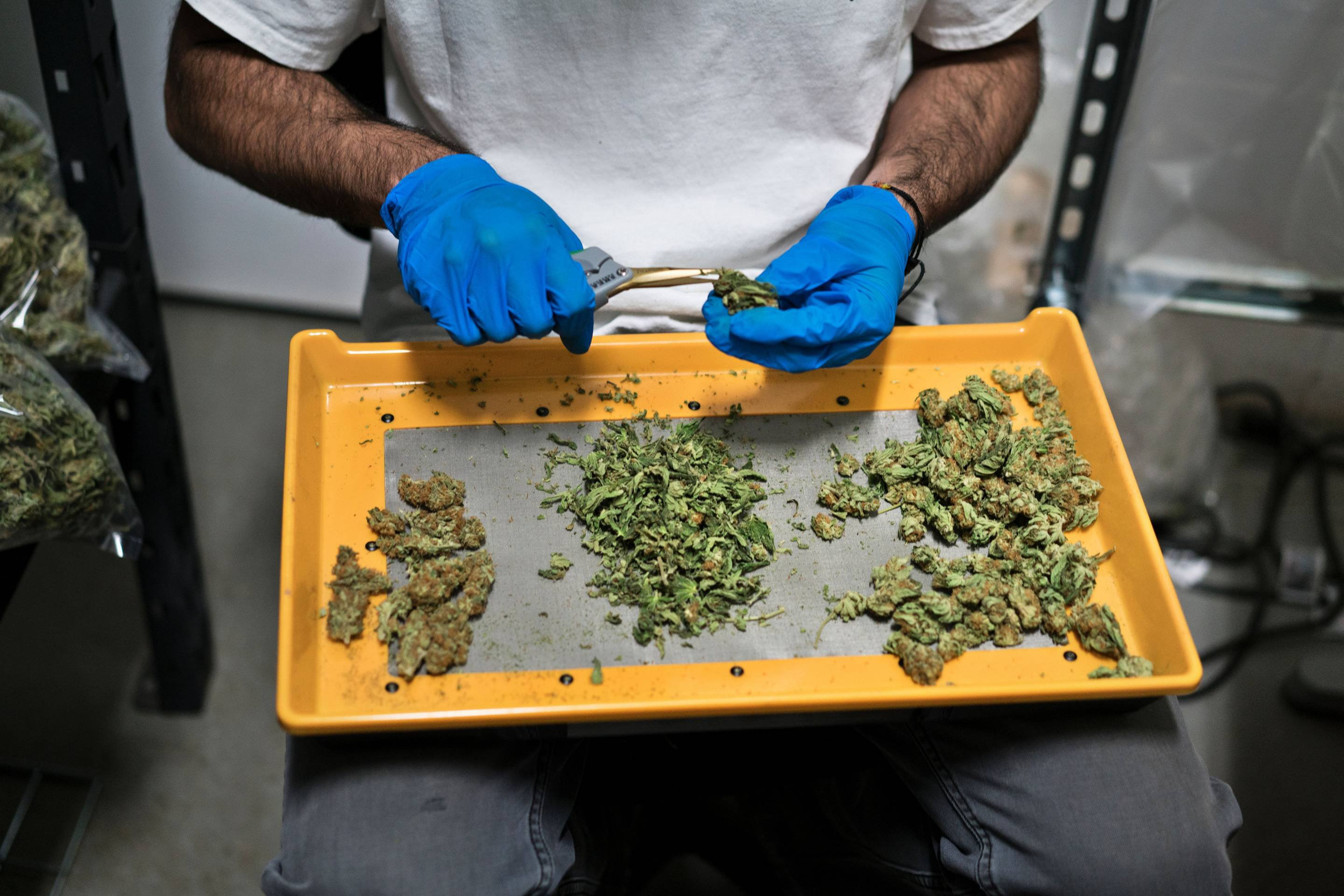 California Puts Illegal Pot Shops (and Shoppers) on Notice