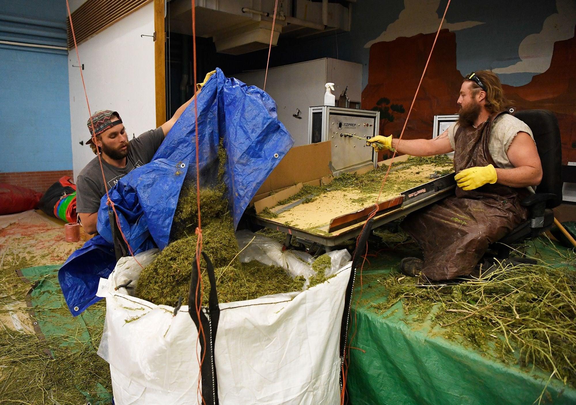 Colorado passes $1 billion in marijuana state revenue