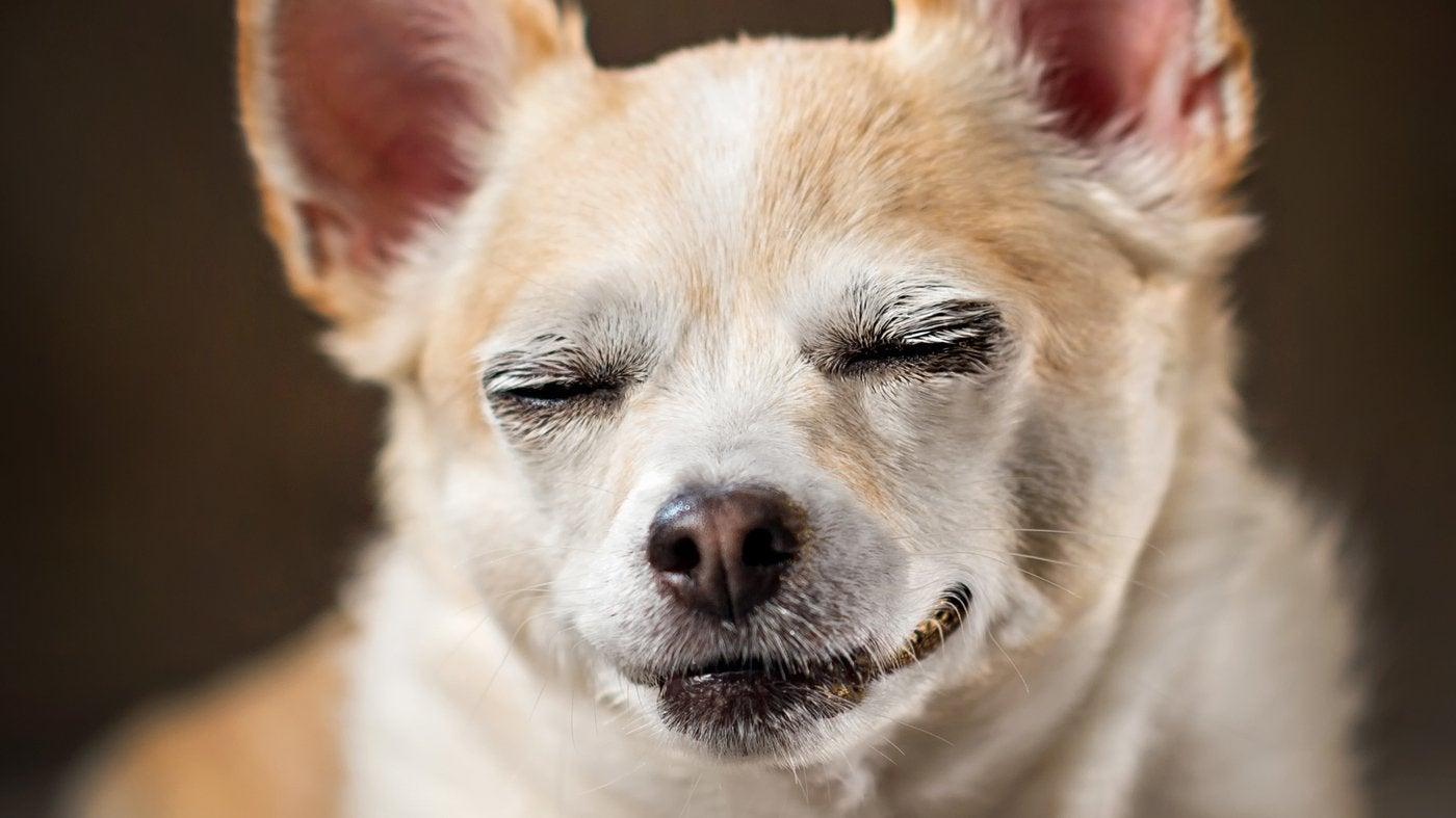 Legalized Marijuana May Be Increasing Pot's Hazard To Pets