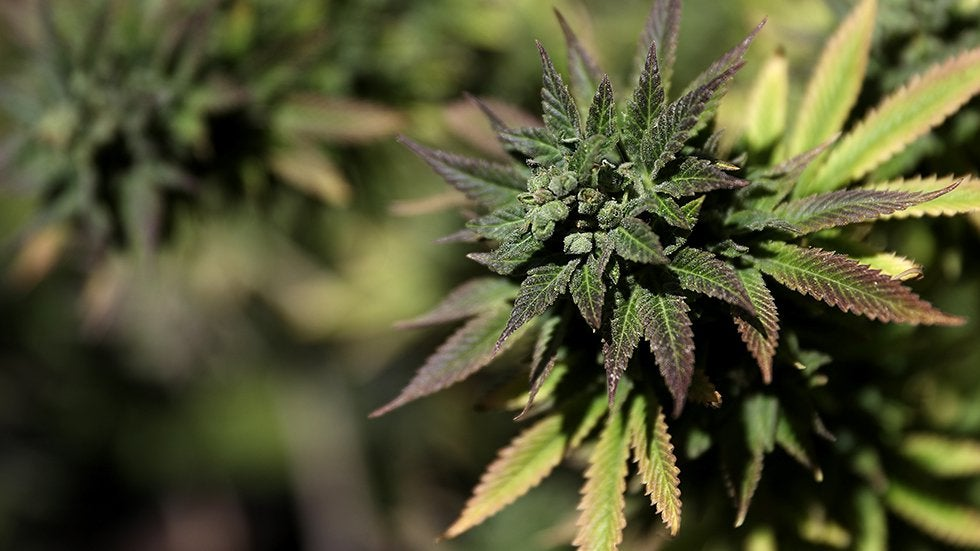 Political winds have shifted in favor of marijuana legalization