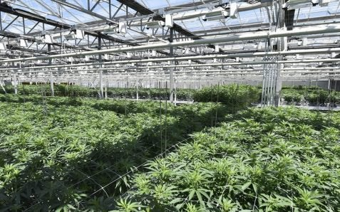 CannTrust Flagged by Health Canada for Cannabis Production from Previously Unlicensed Grow Rooms