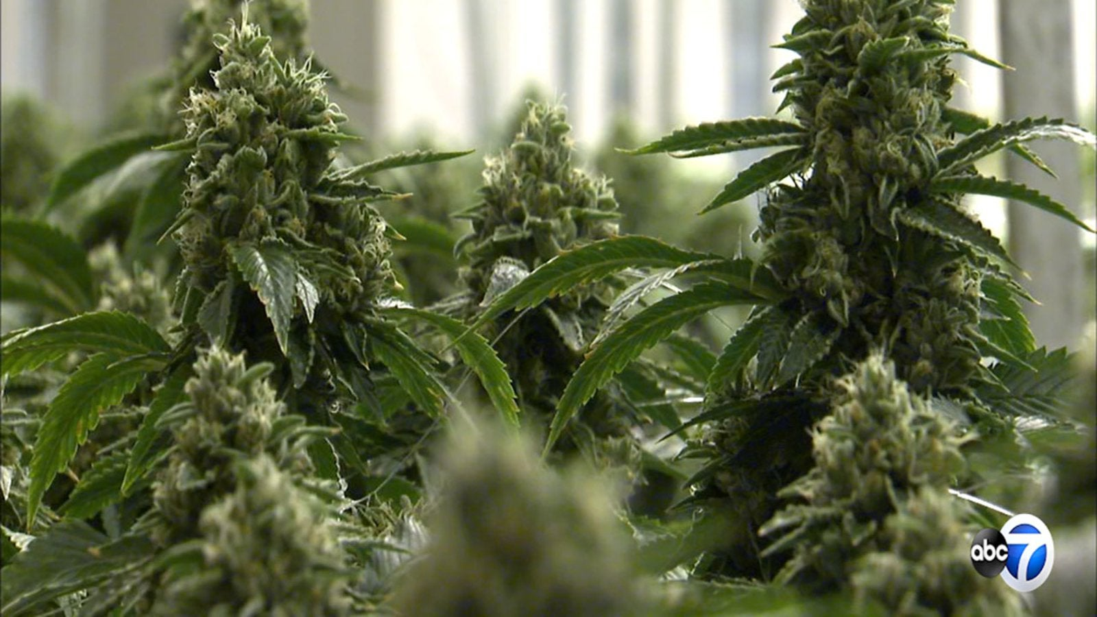In Illinois, what will be the age to open a dispensary or sell recreational marijuana starting in January?