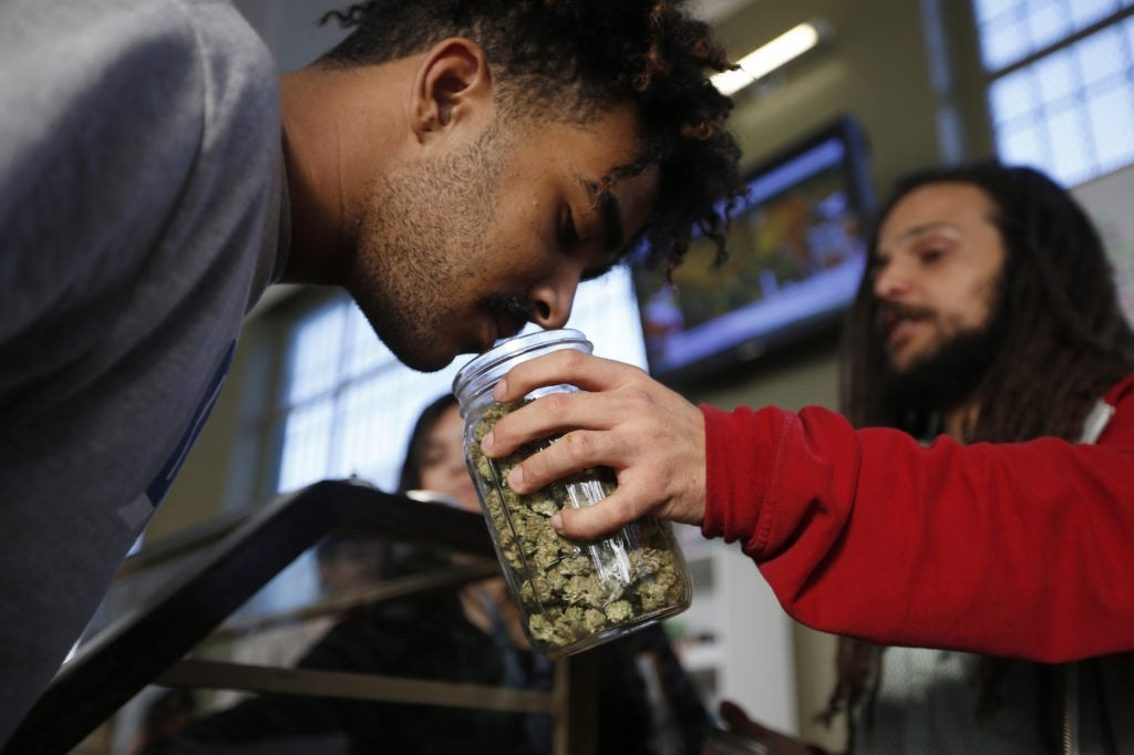Marijuana has become big business. So why are small growers struggling to survive?